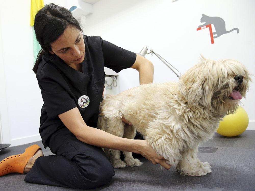 veterinaria con perro