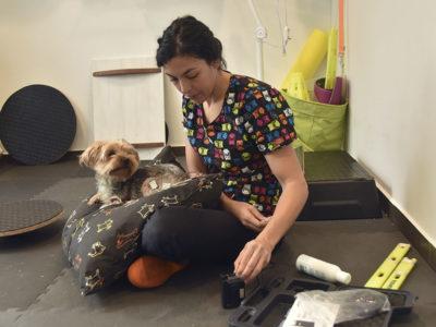 rehabilitacion perro